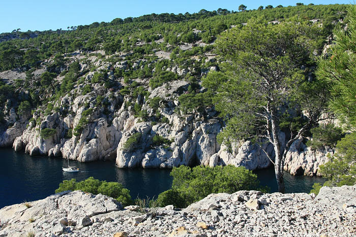 calanque_port_pin_1.jpg